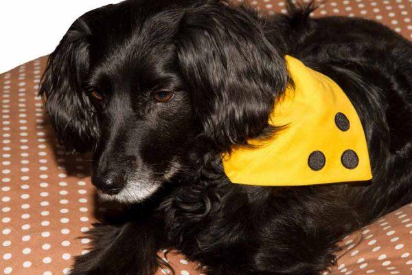 Halsbandtücher für Handicaphunde