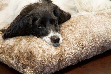 Hundekissen pfötchenalarm comfort line Fleece