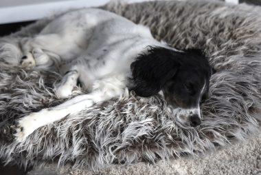Hundekissen pfötchenalarm comfort line Plüsch